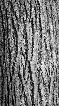 Bark, Break, Contrast, Curves, Furrow, Line, Nature