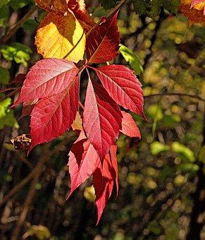 Foliage, Colorful, Autumn, Fall Colors, Season