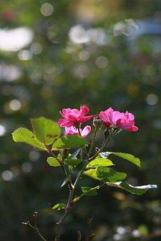 Flowers, Wildflower, Fall Flowers, Petal, Nature, Pink