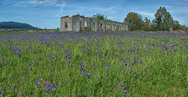 Field, House, Flowers