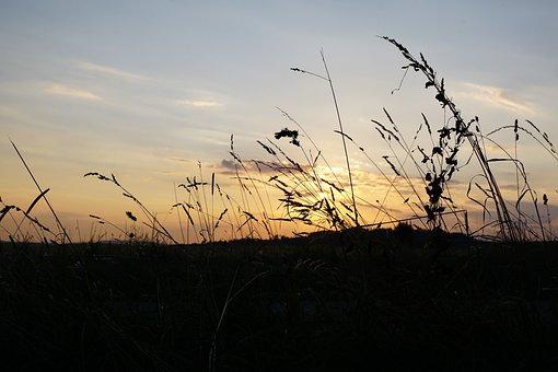 Grain, Field, Bread, Summer, Hegau, Germany