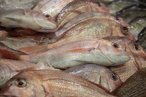 Fish, Market, Sydney, Sale, Seafood, Fresh