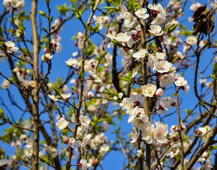 Spring, Blooming, Bloom, Blossom, Plant, Nature, Flower