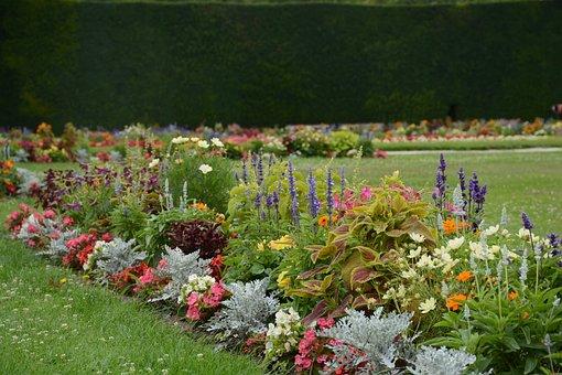 Garden, Flowers, Flower, Summer, Plant, Nature, Red