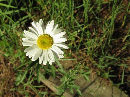 Flower, Garden, Bloom, Blossom, Summer, Spring, White