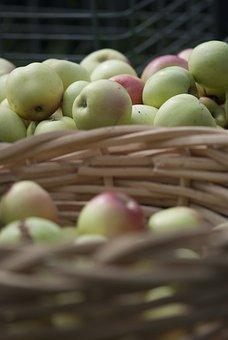 Apples, Fruit, Summer, Autumn, Vitamins, Healthy, Fresh