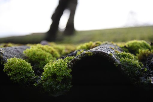 Moss, Roof, Old, Nature, Green, House, Silent, The Roof