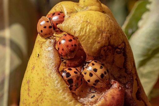 Macro, Beetle, Insect, Nature, Ladybug, Lucky Charm