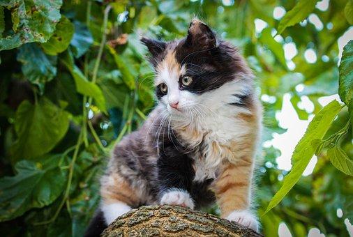 Cat, Kitten, Kitty, Cute, Pet, Feline, Player, Hairy