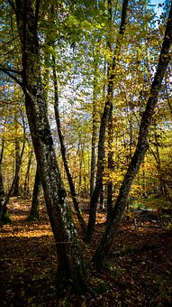 Landscape, Forest Path, Leaves, Nature, Forest, Autumn