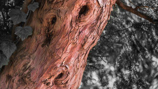 If, Lyon, Nature, Old, Pink, Texture, Tree