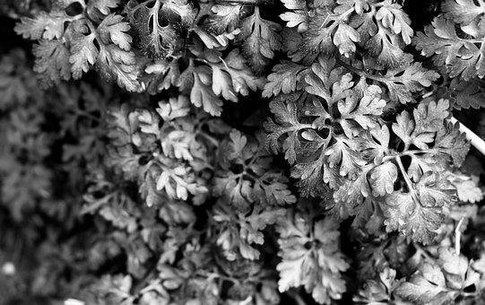 Monochrome, Black White, B W, Nature, Grey, Plant