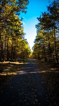 Landscape, Forest Path, Trees, Leaves, Nature, Forest