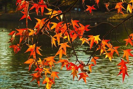 Autumn, Fall Leaves, Leaves, Nature, Fall Foliage