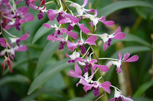 Orchid, Green, Plant, Nature, Botanical, White, Purple