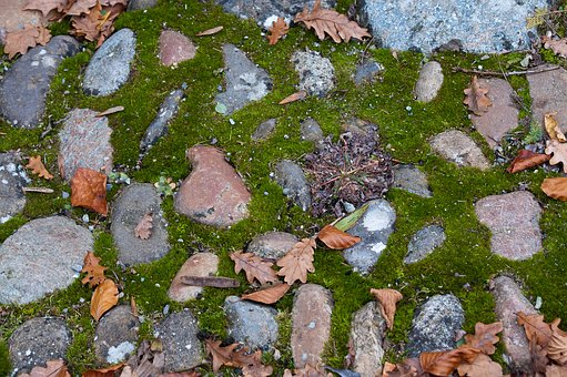 Away, Moss, Stones, Path, Hiking, Autumn, Leaves