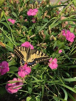 Flowers, Butterfly, Pink