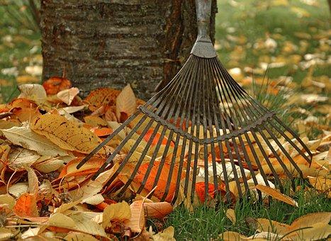 Computing, Raking Leaves, Tool, Garden, Gardening