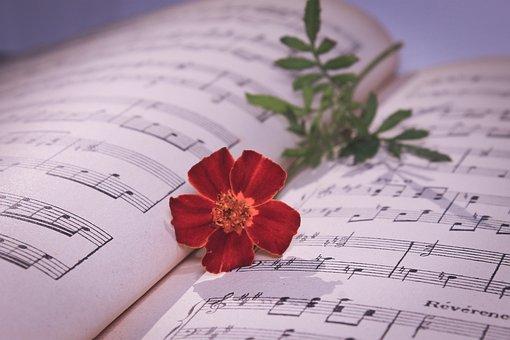 Musical Note, Red Rose, Rose, Red Flower, Flower