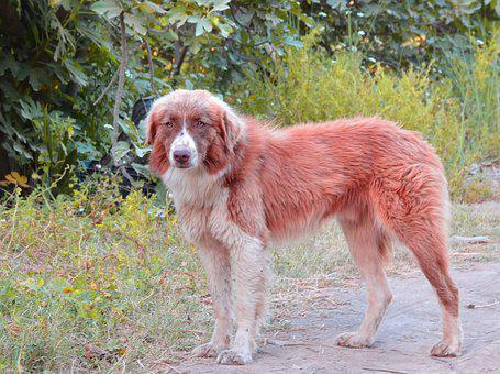 Dog, Forest, Animal, Nature, Trees, Portrait, Retriever