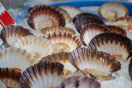 Clams, Seafood, Market, Sale, Food