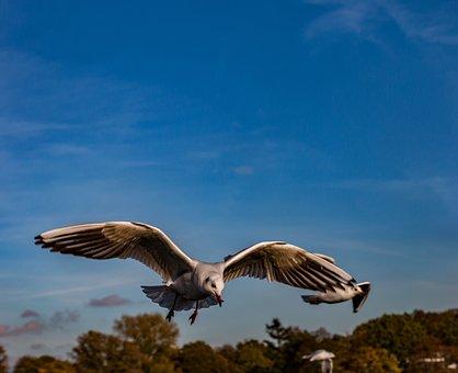 Seagull, Flying, Bird, Sky, Nature, Flight, Sea