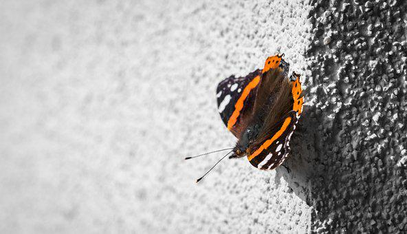 Butterfly, Papillon, Soleil, Vulcain, Wall, Shadow