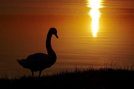 Nature, Sunset, Dusk, Atmospheric, Water, Water Bird