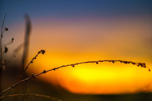 Nature, Evening, Sunset, Landscape, Dusk, Branch, Plant