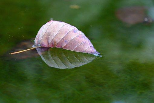 Leaf, Pond, Autumn, Leaves, Fall Leaves, Swim