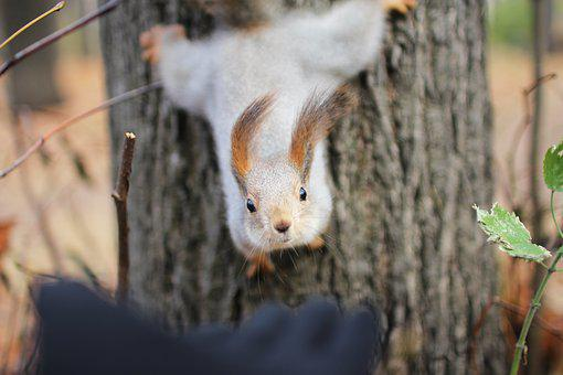 Squirrel, November, Autumn, Tree, Forests, Hand, Close
