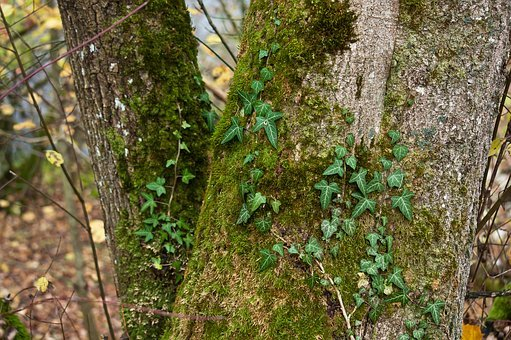 Log, Moss, Tree, Autumn, Green, Wood, Tribe, Structure