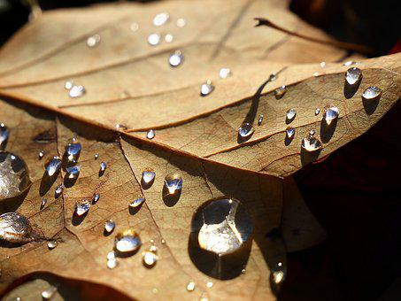 Leaf, Drop Of Water, Nature, Water, Wet, Dew, Droplets