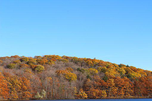 Fall, Lake, Birch, Nature, Water, Autumn, Romantic