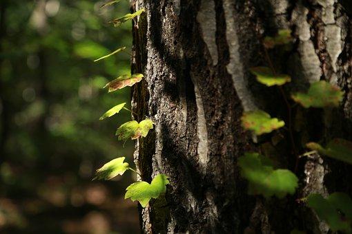 Nature, Wood, Leaf, Plants, Vivid, Bud, The Leaves