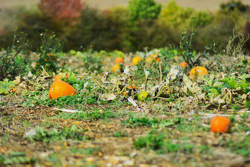 Halloween, Harvest, Agriculture, Autumn, Beautiful