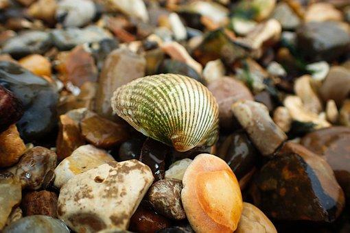 Beach, Aquatic, Holiday, Marine, Nature, Ocean