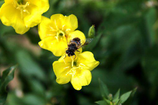 Bee, Flower, Spring, Nature, Bug