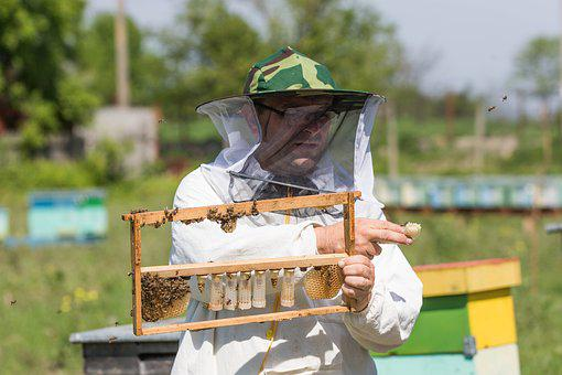 Bee, Beekeeper, The Hive, Beekeeping, Queen