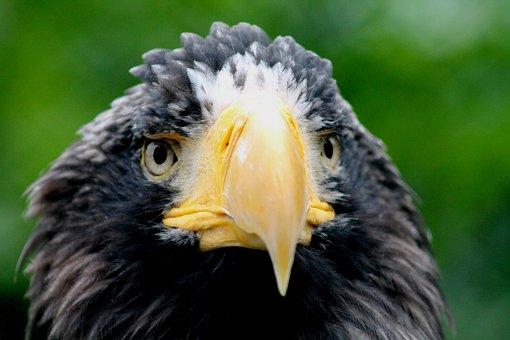 Bird Of Prey, Animals, Nature