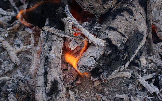Fiery Dragon, Flora, Fauna, Macro, Bokeh, Nature
