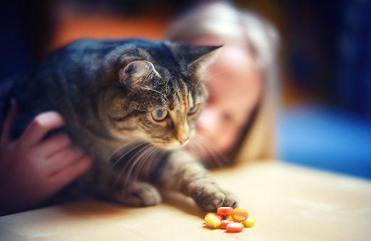 Sweet Tooth, Cat, Candy, Girl, Bokeh, Close Up