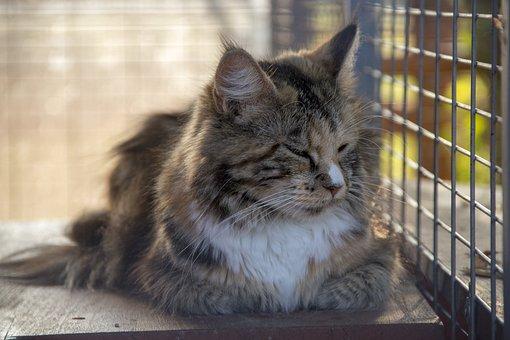 Cat, Calm, Animal, Kitten, Cute, Animal World Of
