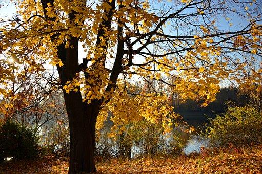 Tree, Deciduous Tree, Autumn, Landscape