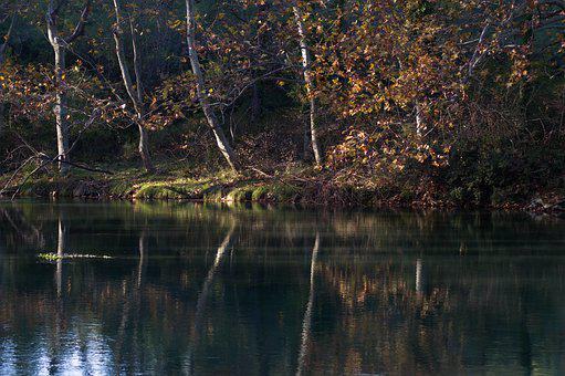 Fall, Lake, Trees, Reflections, Trunks