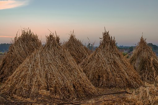 Hay, Wheat, Field, Agriculture, Harvest, Landscape