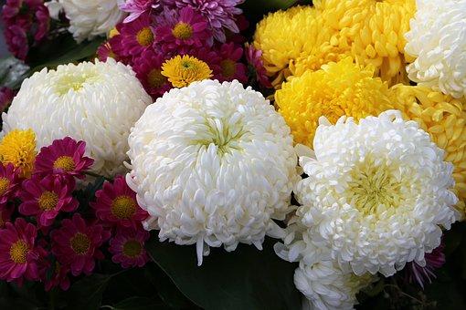 White, Yellow, Violet Chrysanthemum, Chaplet, Flower