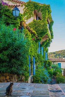 Place, Overgrown, Flowers Romantic, Cat