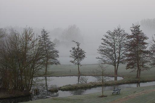 Tree, Fog, Landscape, Mist, Morning, Bench, Golf, Trees