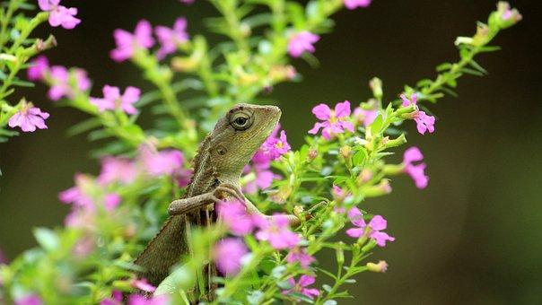 Lizard, Garden, Flowers, Reptile, Beautiful, Nature